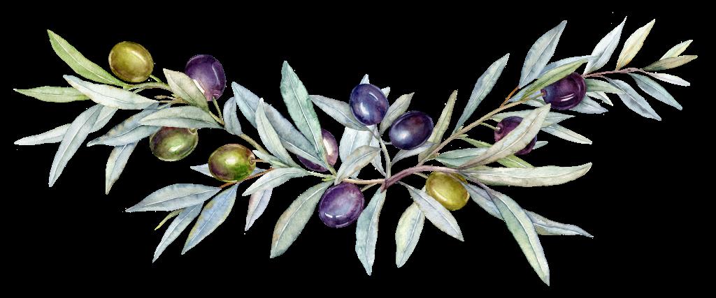 olive sketch